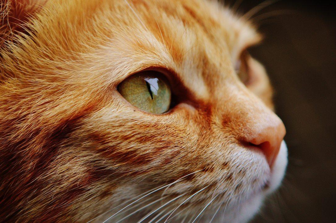 animal-animal-photography-cat-115011