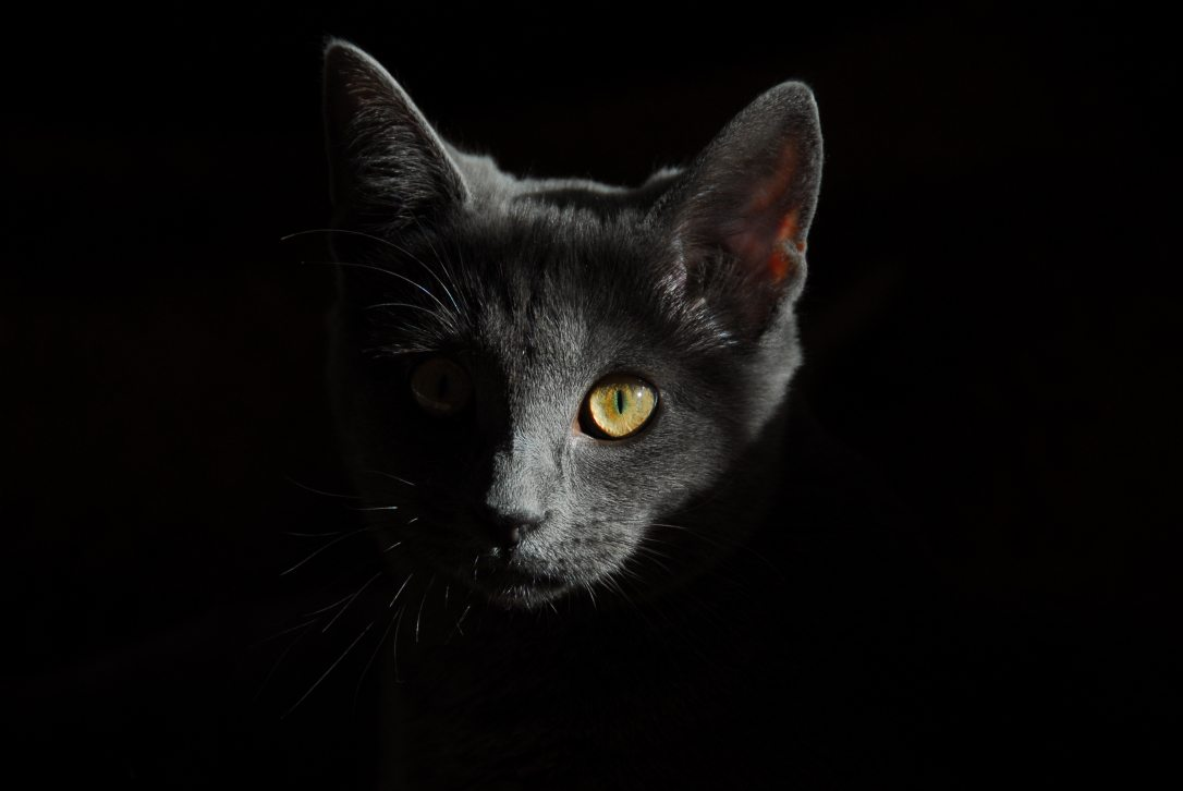 animal-cat-close-up-36009